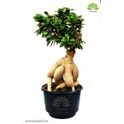 بن سای مینیاتوری درختچه ژاپنی کد BB012