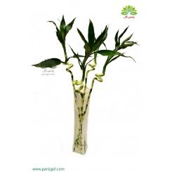 بامبو (لاکی بامبو) شاخه ای خوش شانس کد BB803
