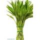 بامبو (لاکی بامبو) شاخه ای پیچ دار کد BB805