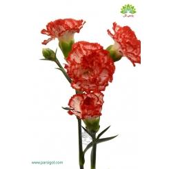 گل شاخه بریده میخک قرمز