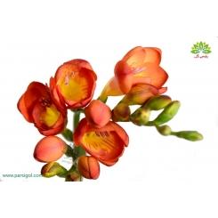 گل شاخه بریده فریزیا (فرسی) نارنجی