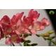 گل شاخه بریده فرزیا(فرسی) صورتی
