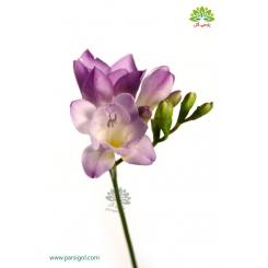 گل شاخه بریده فریزیا (فرسی) بنفش