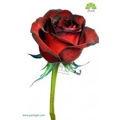 گل شاخه بریده رز قرمز لب مشکی