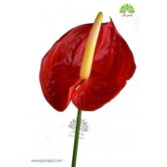 دسته گل آنتوریوم قرمز