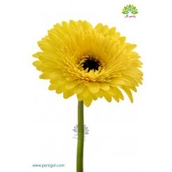 گل شاخه بریده ژربرا زرد