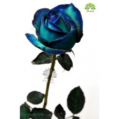گل شاخه بریده رز آبی پر رنگ