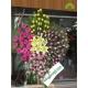 تاج گل افتتاحیه و تبریک دو متری کد DF08201