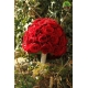 گل دست عروس کد DF02704