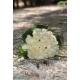 گل دست عروس کد DF02804