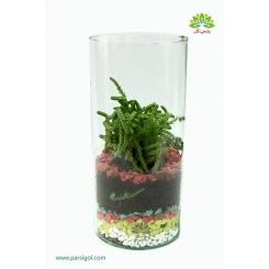 تراریوم (باغ شیشه ای) استوانه فانتزی کد TR216
