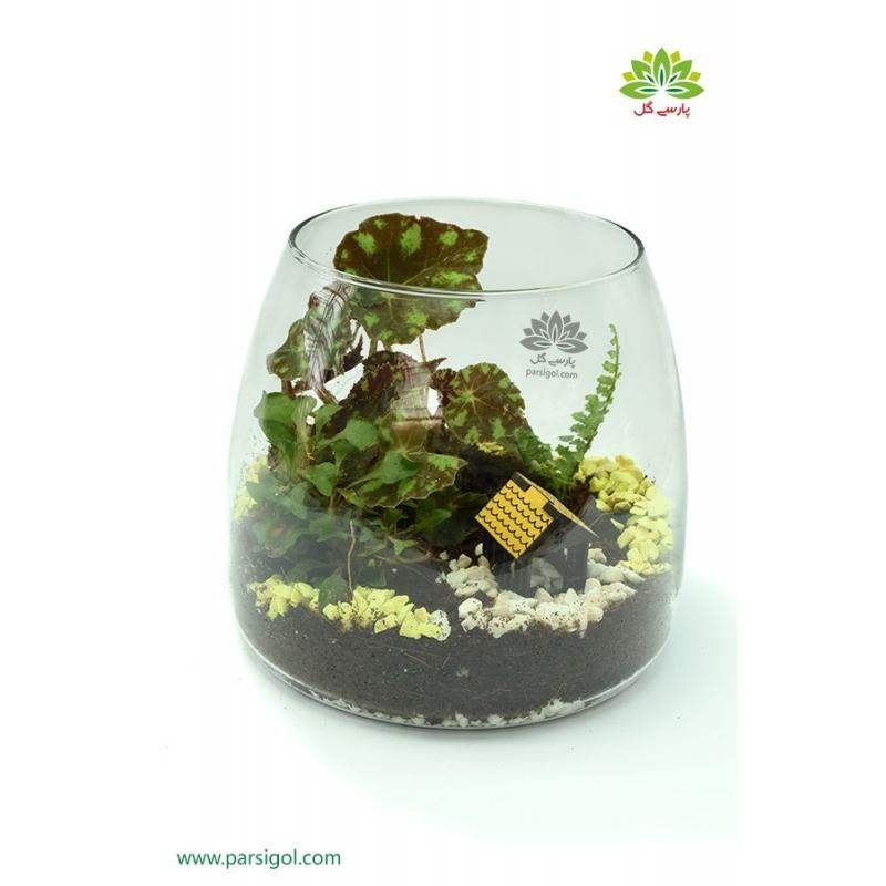 تراریوم (باغ شیشه ای) جنگلی بسته کد TR218