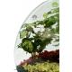 تراریوم (باغ شیشه ای) بسته جنگلی کد TR222