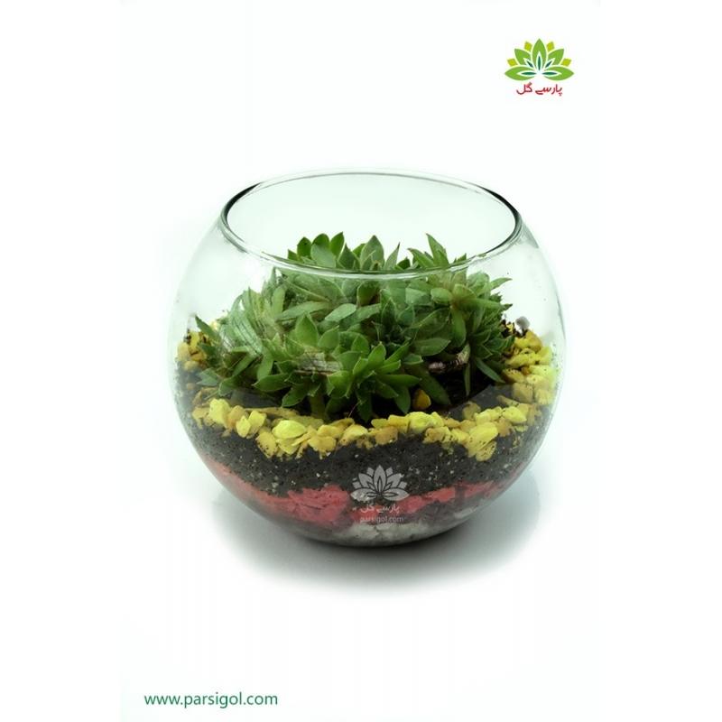 تراریوم (باغ شیشه ای) گیاهان گوشتی کد TR224