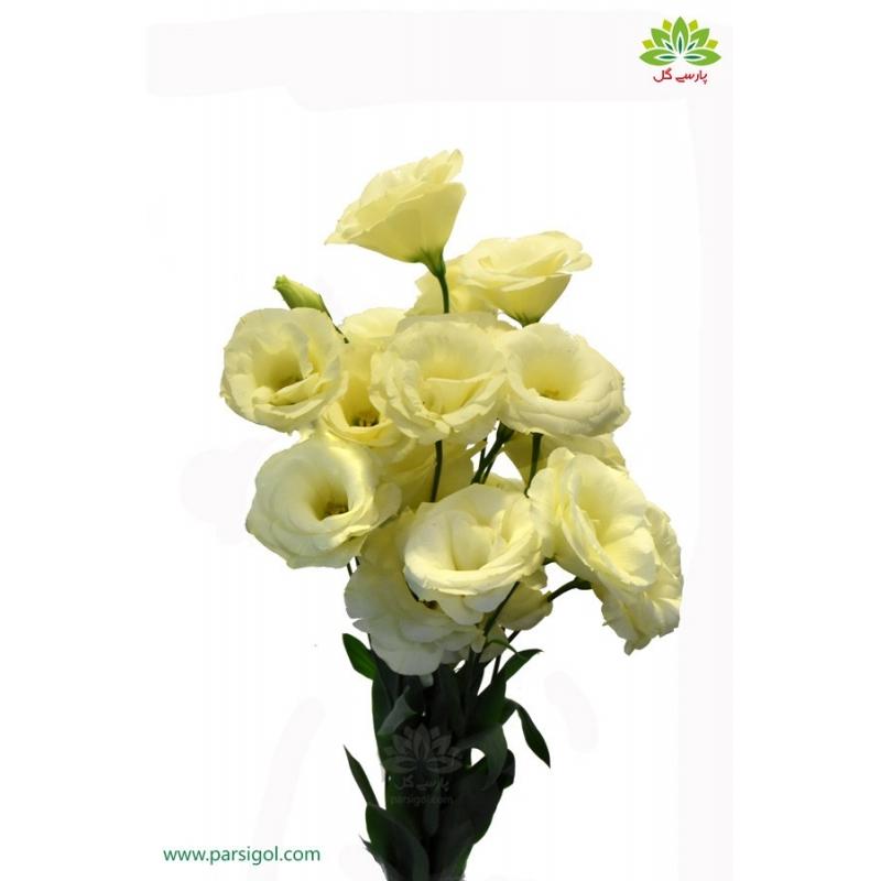 گل لیسیانتوس زرد کم رنگ