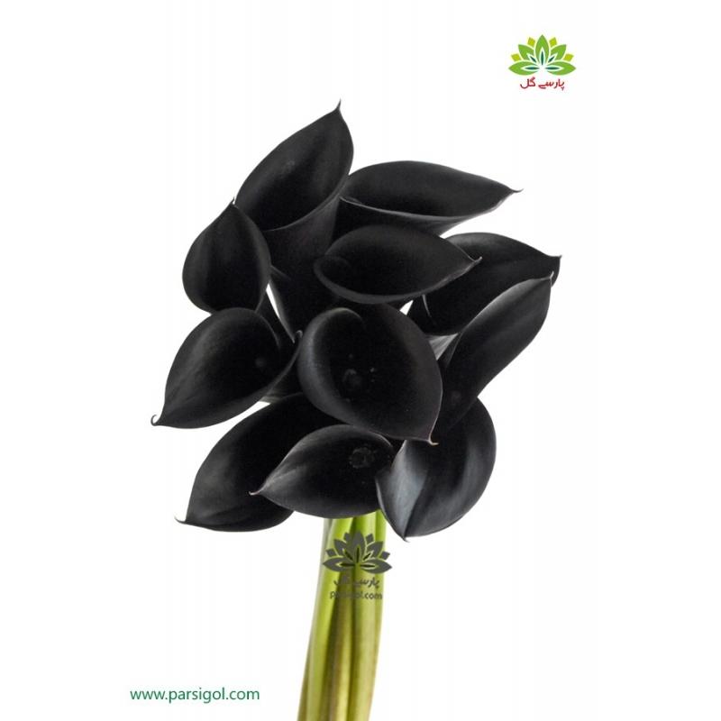 گل شاخه بریده شیپوری مشکی