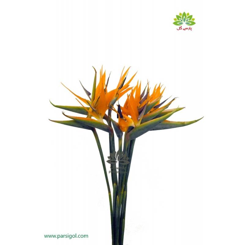 گل شاخه بریده استرلیتزیا