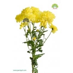 گل شاخه بریده کرزنتی زرد