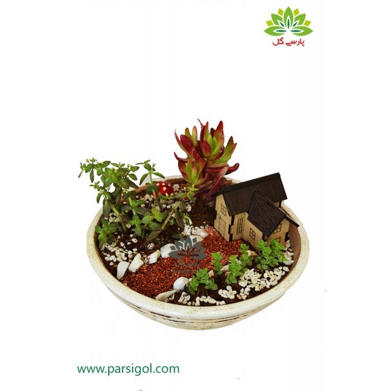 دیش گاردن زیبا و فانتزی گیاهان گوشتی کد DG004