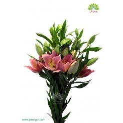 گل لیلیوم دسته ای صورتی