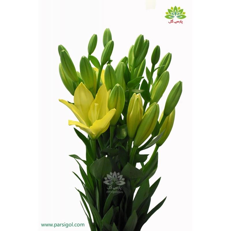 گل لیلیوم دسته ای زرد