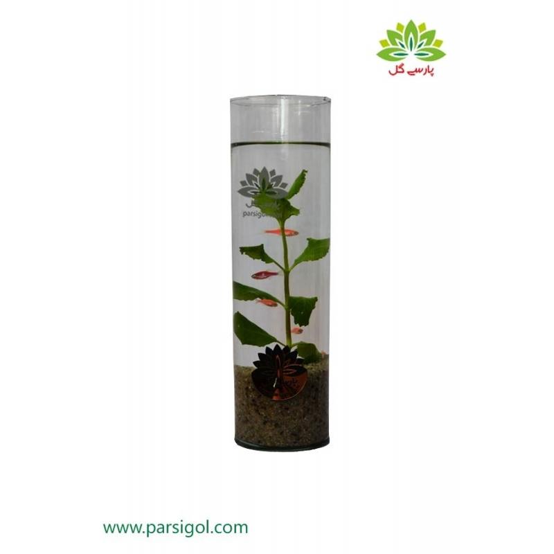 ویواریوم استوانه گیاه آبزی کد VR003