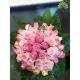 گل دست عروس کد DF08304