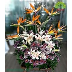 سبد گل تبریک استرلیتزیا و داوودی کد DF06102