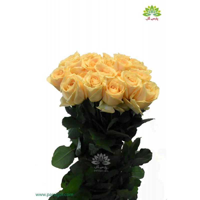 اشتراک گل