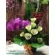 گلدان گل ارکیده و شیپوری کد DF07305