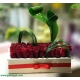 باکس گل خواستگاری رز قرمز هلندی کد DF07605