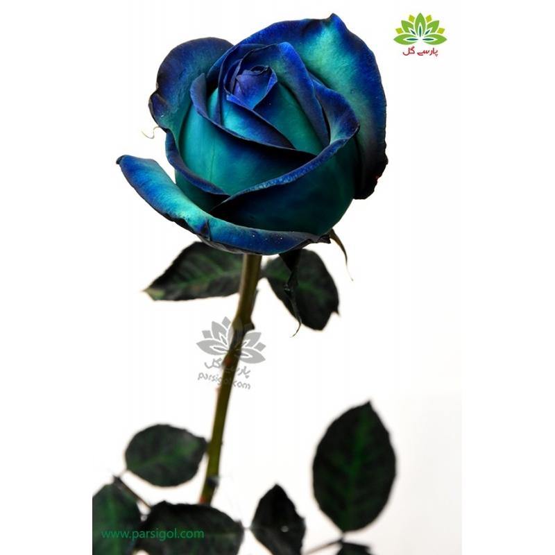 گل شاخه بریده رز آبی