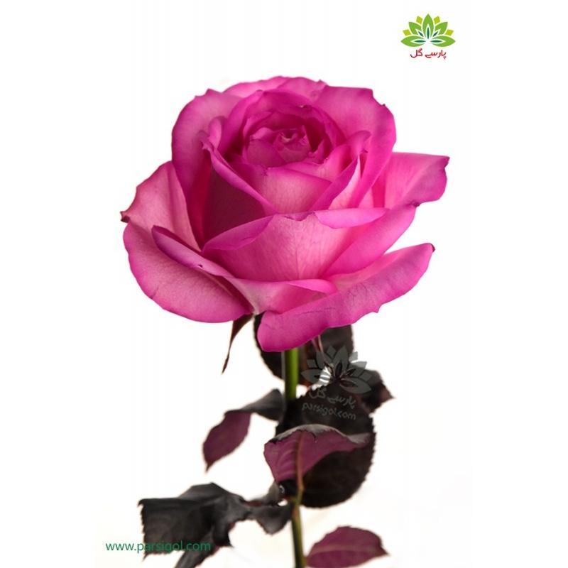 گل شاخه بریده رز صورتی