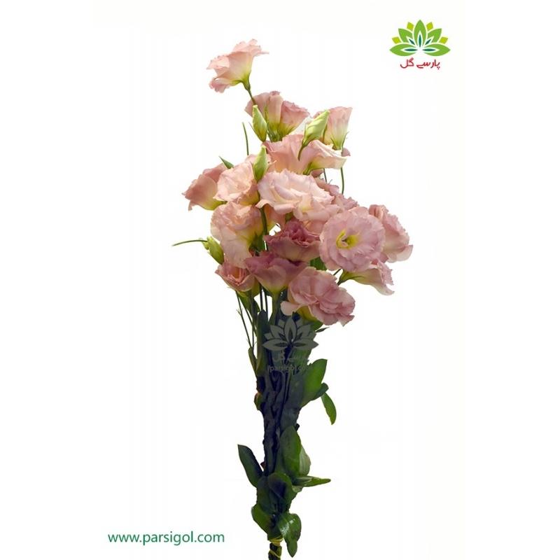 گل شاخه بریده لیسیانتوس گلبهی