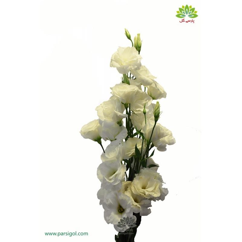 گل شاخه بریده لیسیانتوس سفید