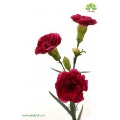 گل شاخه بریده میخک زرشکی