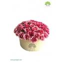 جعبه گل بهاری میخک صورتی کد DF01405