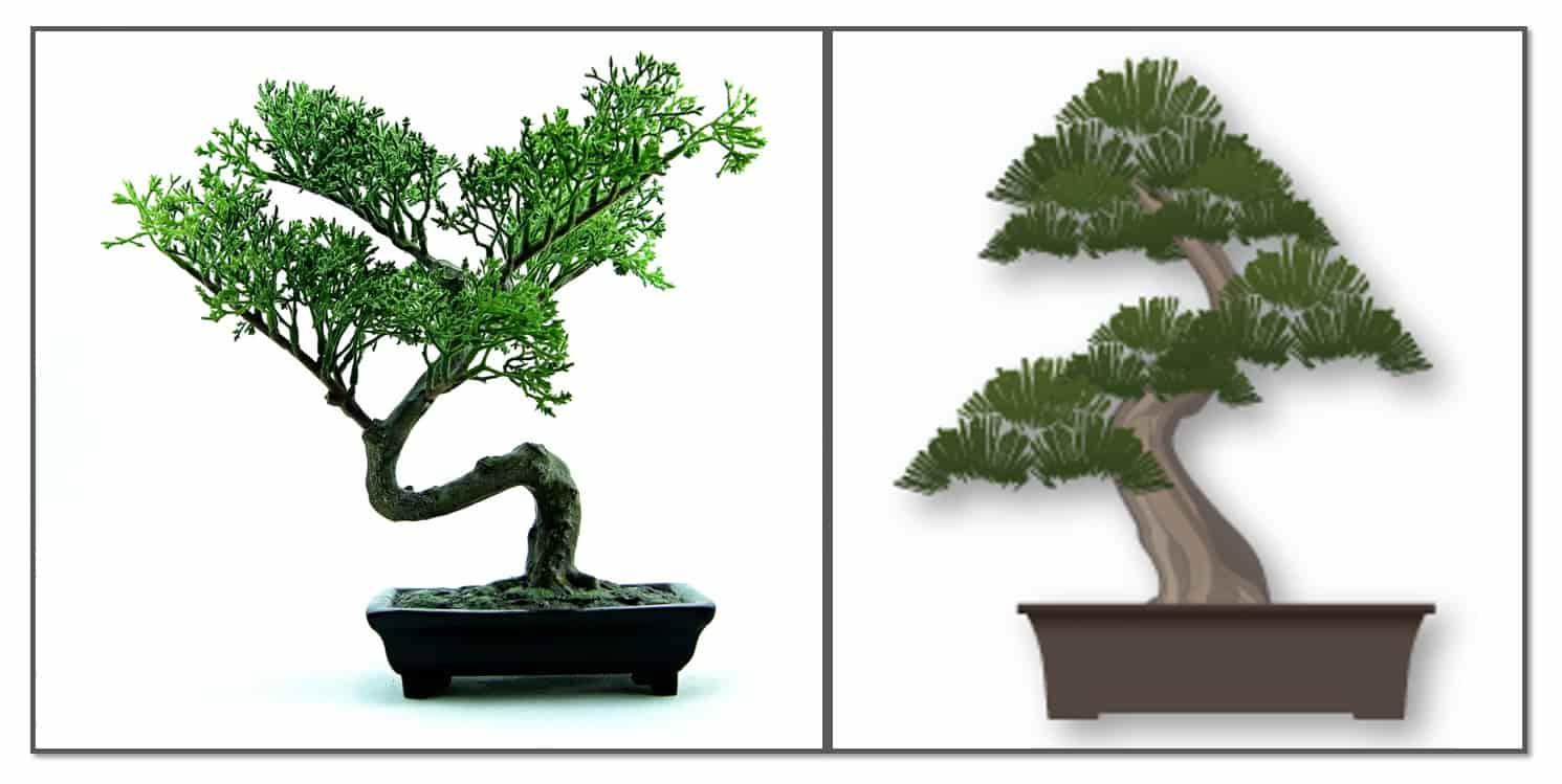 خرید انواع مدل درختچه بونسای ژاپنی ممتاز
