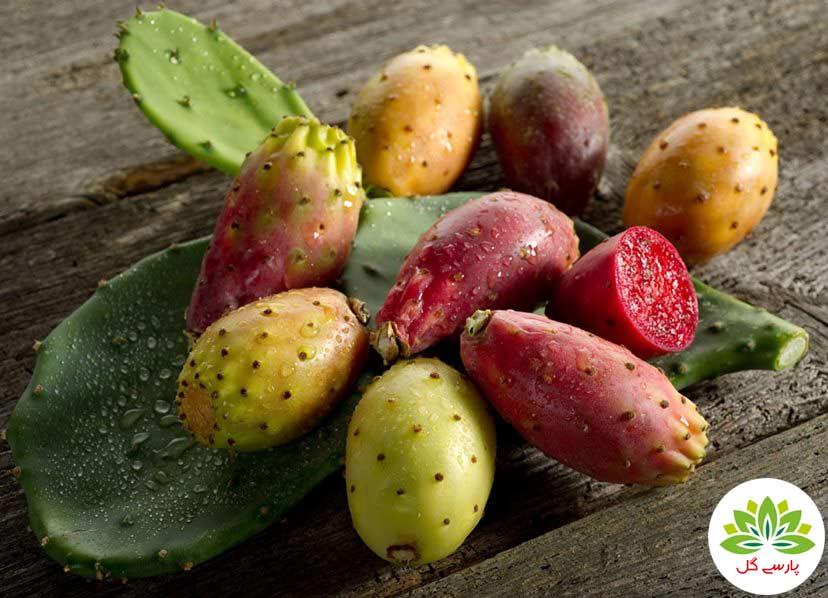 ده فایده مهم میوه کاکتوس، خواص میوه کاکتوس، مزیت خوردن میوه کاکتوس، فواید میوه کاکتوس