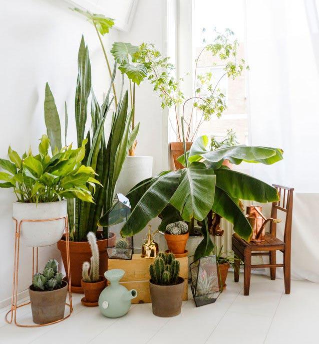 خواص مفید گلکاری و باغبانی، فواید گل و گیاه طبیعی، مزایای استفاده از گل طبیعی و گل و گیاه