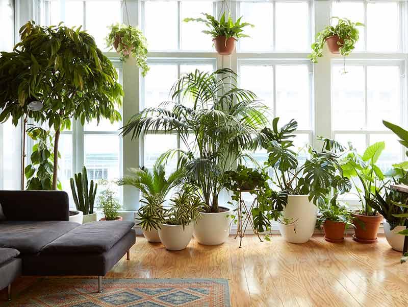 مزایای استفاده از گل و گیاه، فواید باغبانی و گلکاری، خواص استفاده از گل طبیعی و فواید گلکاری و باغبانی