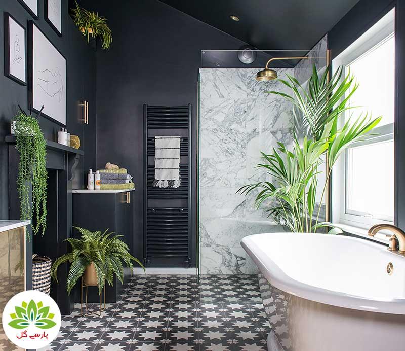 انواع گیاهان مناسب دستشویی و حمام، 7 گیاه زیبا برای سرویس بهداشتی، گل های مقاوم به نور کم مخصوص حمام و دستشویی