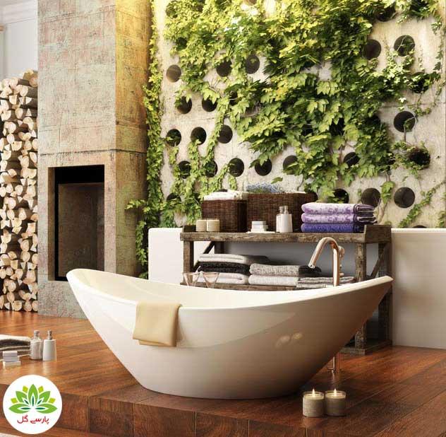بهترین گیاهان مخصوص سرویس بهداشتی، گیاهان گلدانی همیشه سبز برای حمام و دستشویی