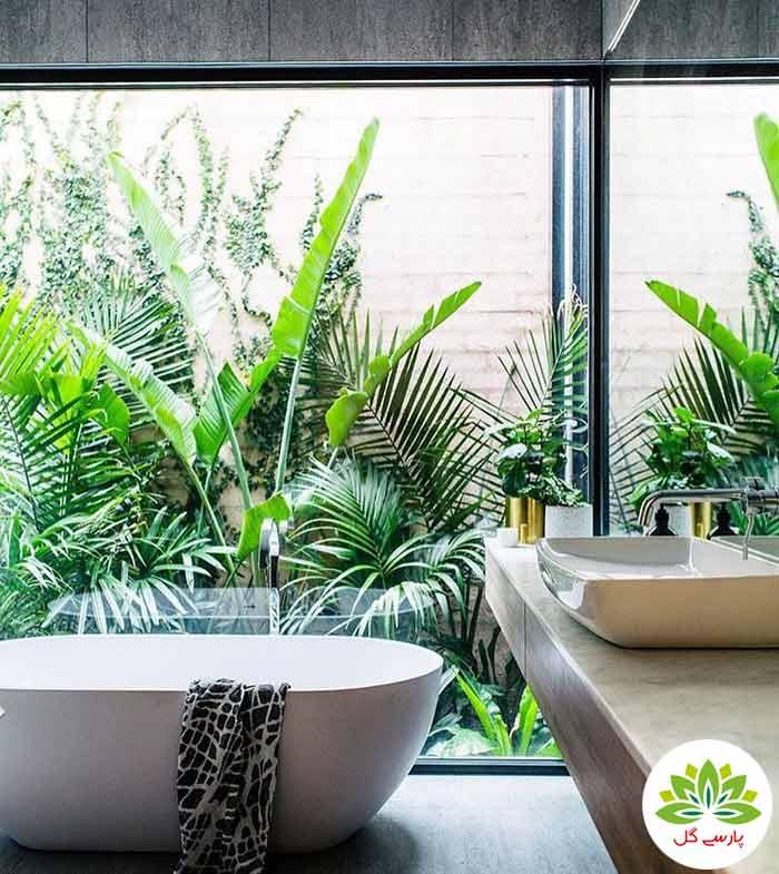 زیباترین گیاهان آپارتمانی همیشه سبز برای سرویس بهداشتی و حمام و دستشویی، بهترین گیاهان گلدار و همیشه سبز در حمام و دستشویی
