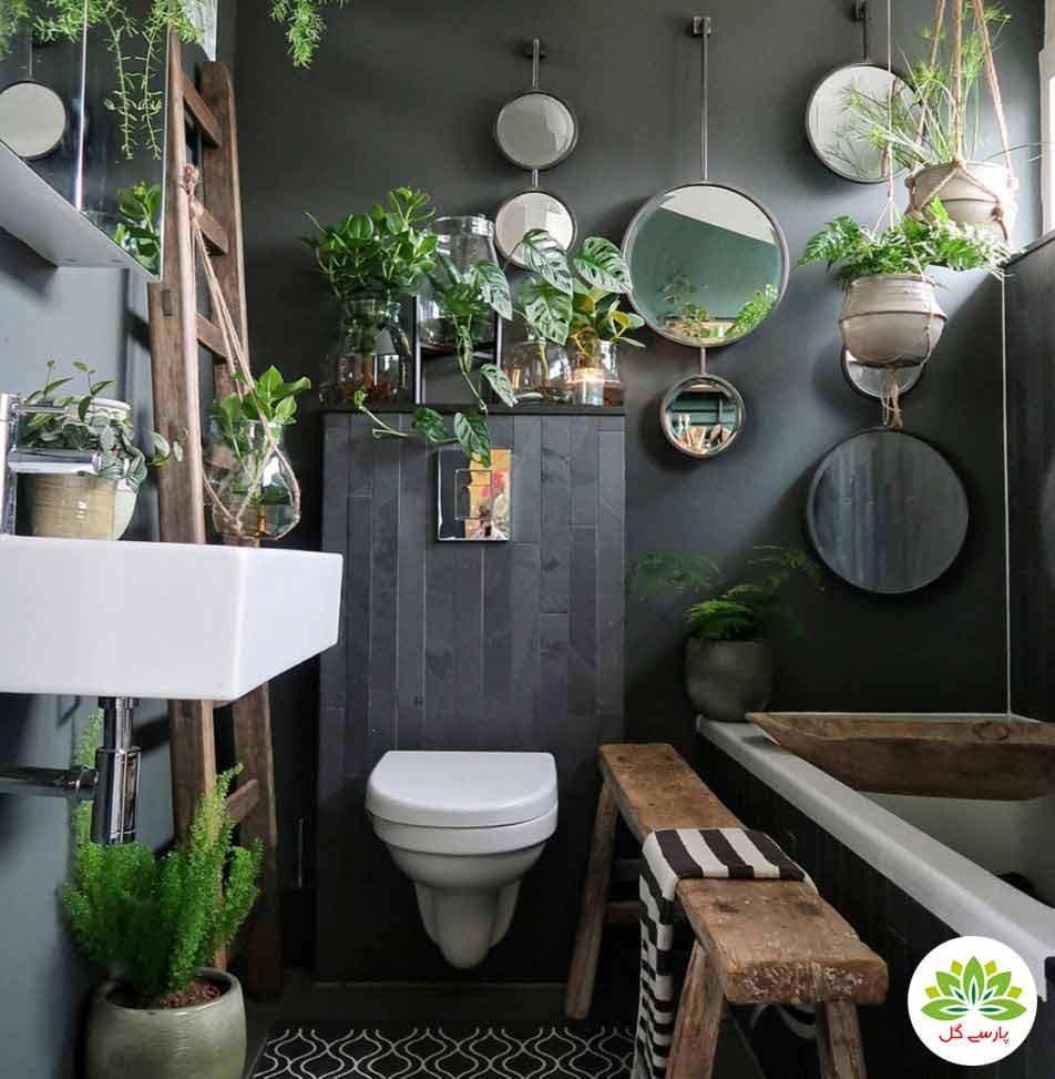 معرفی بهترین گیاهان مناسب سرویس بهداشتی و حمام، 7 گیاه مناسب حمام و دستشویی با نور کم