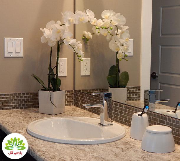 گل ارکیده و ارکیده گلدانی مخصوص سرویس بهداشتی، حمام و دستشویی
