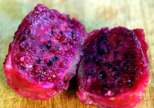 خرید کاکتوس و میوه کاکتوس، فروش کاکتوس
