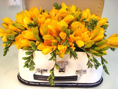 قیمت گل فرزیا، فروش آنلاین گل فرزیا، خرید دسته گل فرزیا ارزان