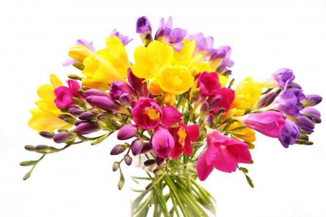 گل فرزیا، خرید گل فرزیا، قیمت دسته گل فرزیا ارزان