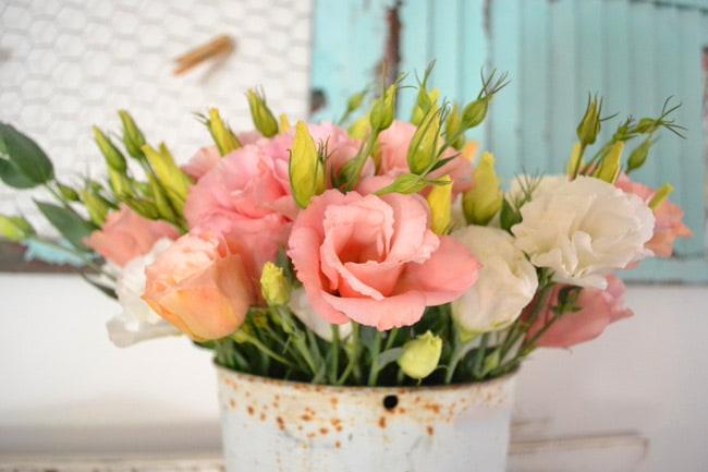 قیمت گل لیسیانتوس، خرید گل لیسیانتوس، فروش گل لیسیانتوس